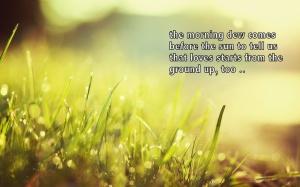 1-grass-morning-sunrise-drops-dew-nature